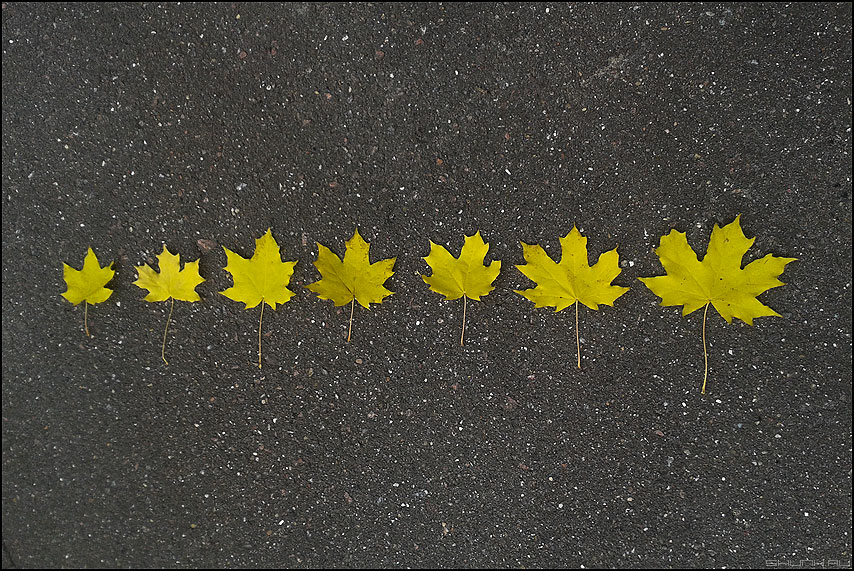 Все этапы осени - этапы листья листочки асфальт элементы осень вряд фото фотосайт