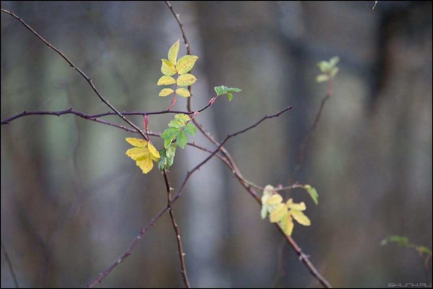 Опадать - листья осень веточки кроп фото фотосайт