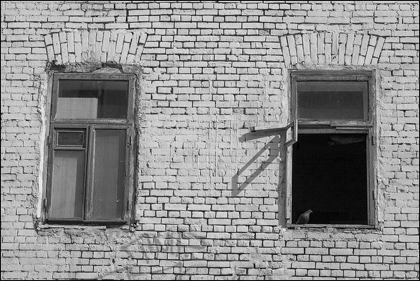 Про голубя - голубь окно форточка открыто чернобелое фото фотосайт