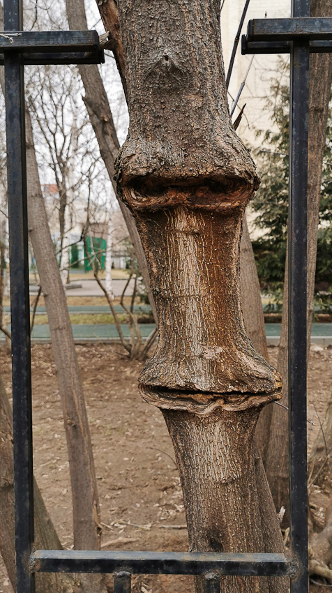 Заказывайте... - дерево забор рожа физиономия фото фотосайт