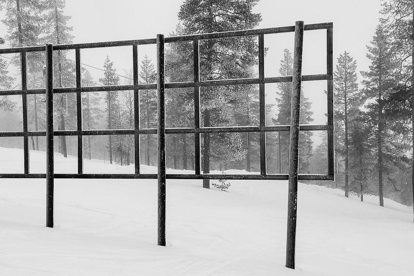 Геометрия леса - 2020 леви прямоугольники геометрия чернобелое фото фотосайт