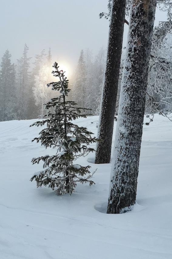 Светить - зима леви зимнее 2020 елочка свет