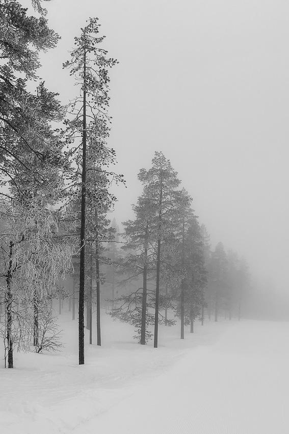По нисходящей - горы леви зима 2020 горнолыжный кататься туман фото фотосайт
