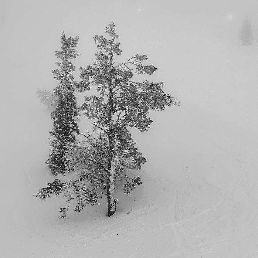 Квадратный туман - тумал леви елки лес чернобелое 2020