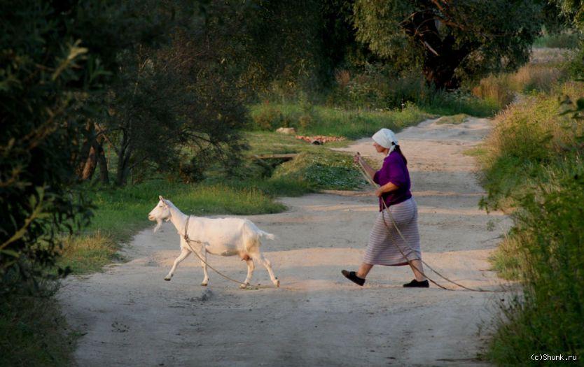 Хозяйка с Козой - коза Нина Трусова фото фотосайт