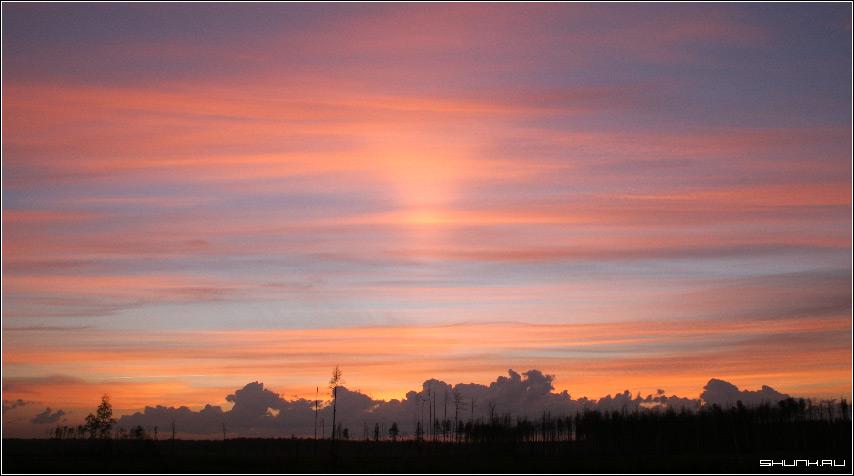 Неземной закат - небо закат лес вырубка фото фотосайт