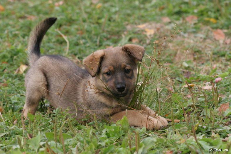 Пес - собака трава фото фотосайт
