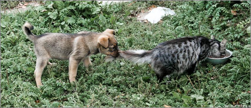 ...Это моя миска... - кот собака щенок фото фотосайт