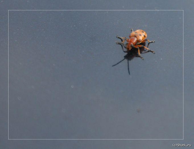 Жук - жук на поверхности фото фотосайт