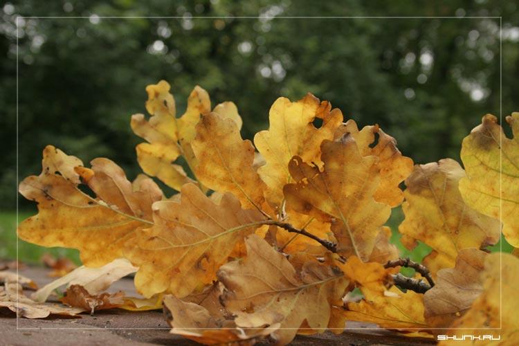 И снова осень - осень листья дуба унылая пора фото фотосайт