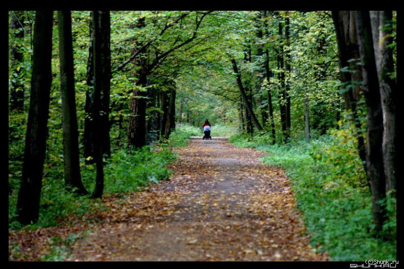 Что ж ты осень натворила? - парк коляска осень листва фото фотосайт