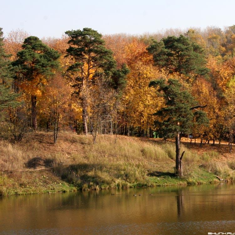 Лес застыл и .... - осень деревья берег серия времена года фото фотосайт