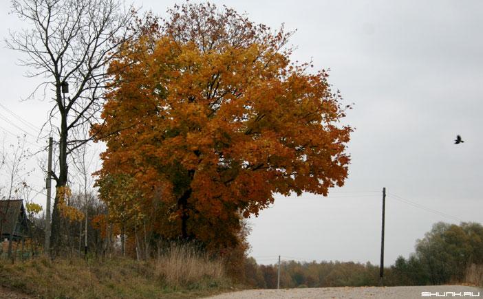 До скворечника далеко... - птица небо осень скворечник листва фото фотосайт