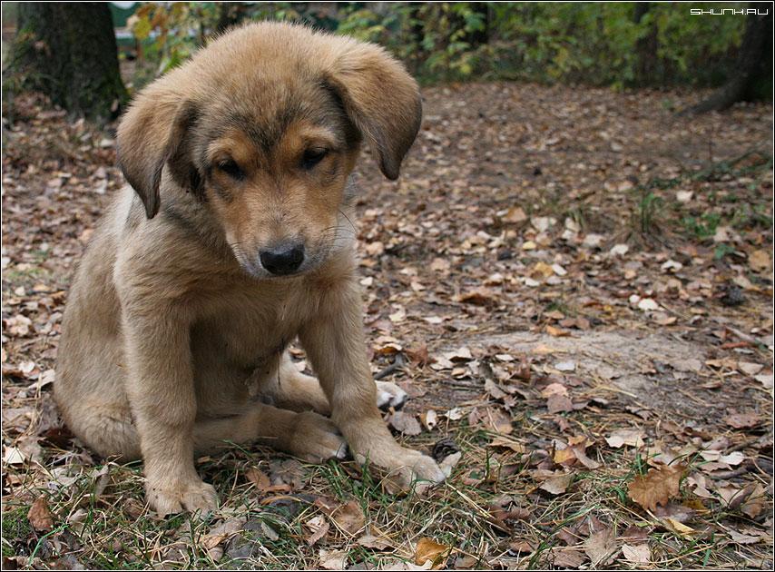 Пёска - щенок листва осень грустный фото фотосайт