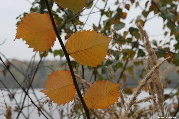 Последние листики - листья четыре ветка желтый цвет фото фотосайт