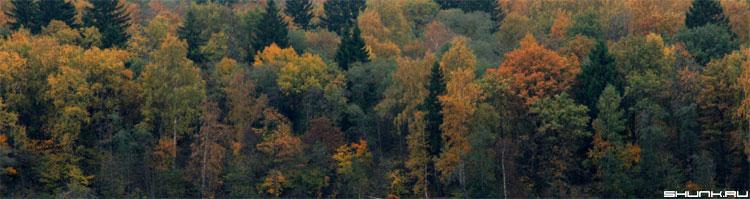 Палитра - осень лес листва цвета осени фото фотосайт