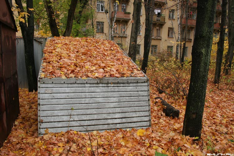 Навалило - осень ракушка листва фото фотосайт