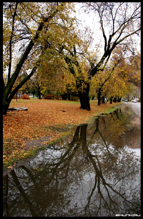 Зеркало осени - лужа осень дерево фото фотосайт