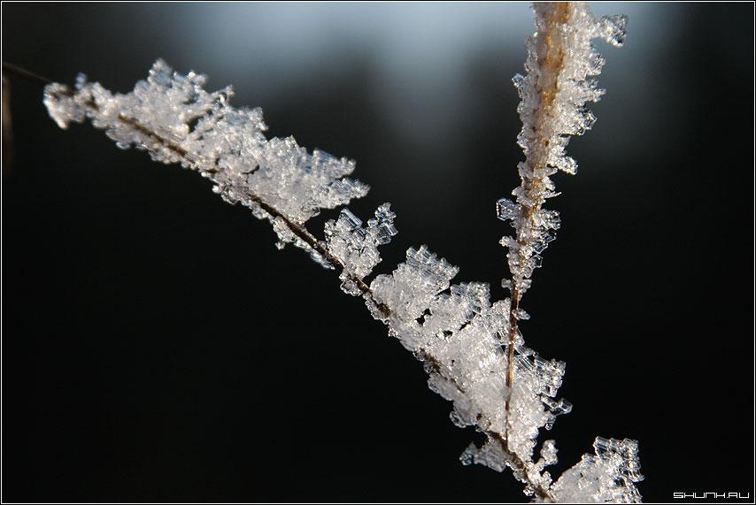 Зима на травинке - кристаллики льда на траве фото фотосайт