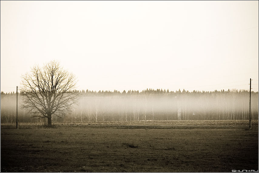 Туманы... Туманы... - дерево лес небо туман фото фотосайт