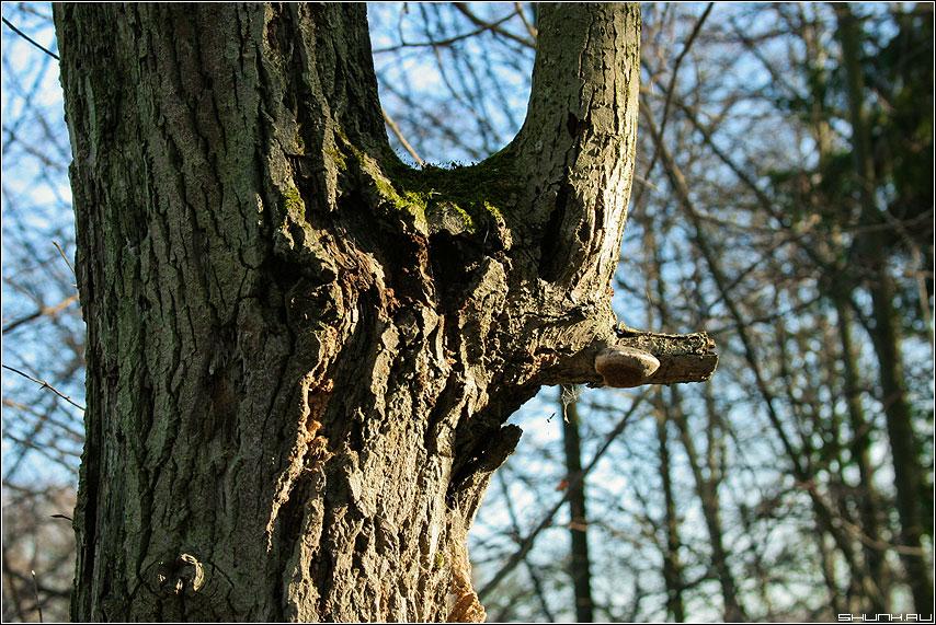 Носорог - дерево лес осень фото фотосайт