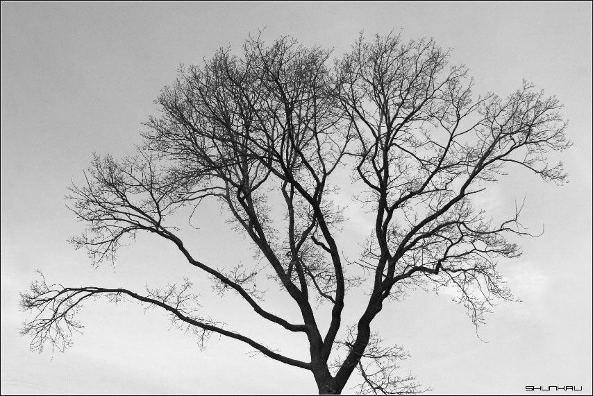 Уличный фрактал - дерево небо фото фотосайт
