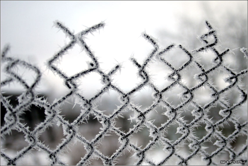 Забор - рабица забор иней фото фотосайт