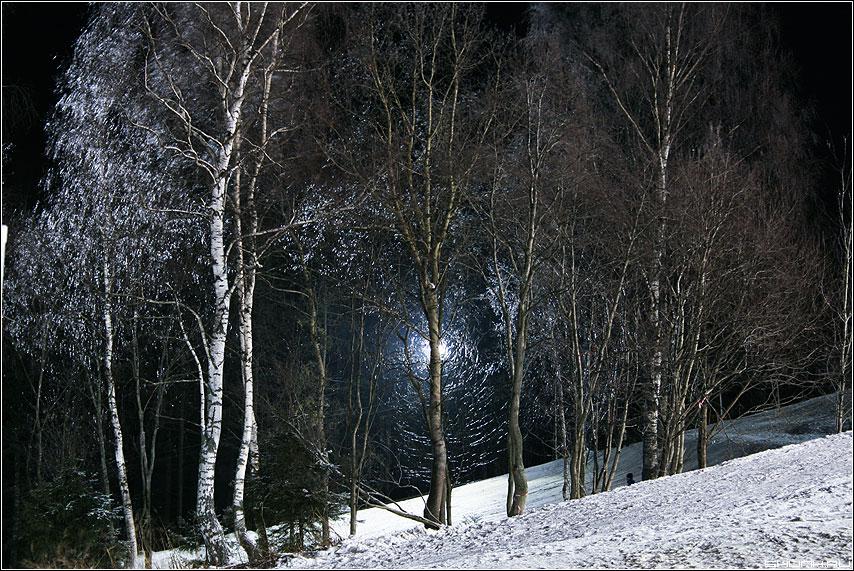 Сквозь... - свет лес склон зима фото фотосайт