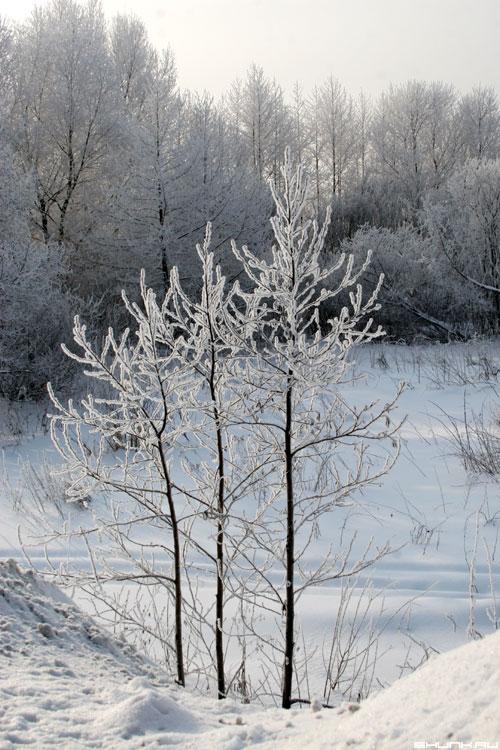 Загород... - зима снег деревья фото фотосайт