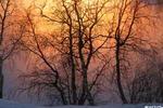 Туманный закат - никель речка туман ветви небо