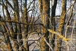 Болен весною - дерево лишай весна деревенское природа