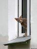 Кошка в Окошке - кот окно приоткрыто
