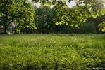 Солнечный денек - лужайка клены солнце лето