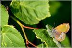 Басня. Бабочка и муха. - макро бабочка муха