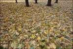 Осень на пяти столбах - осень ковер листва 2010 деревья листики