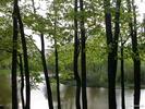 Столбики - деревья пруд