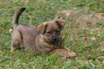 Пес - собака трава