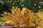 И снова осень - осень листья дуба унылая пора