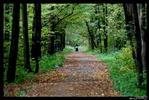 Что ж ты осень натворила? - парк коляска осень листва