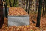 Навалило - осень ракушка листва