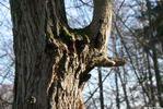 Носорог - дерево лес осень