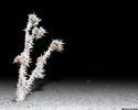Изо льда (в ночи) - растение иней ночь
